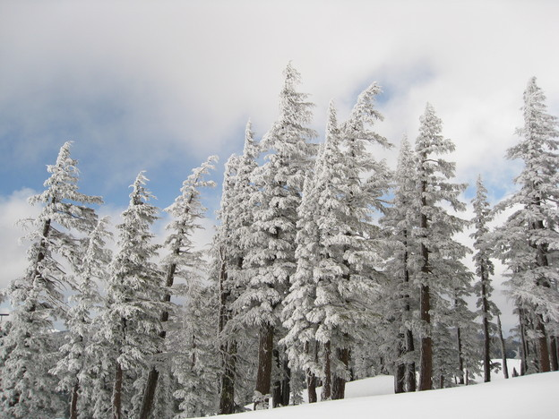 Ice on the trees at Mt Bachelor